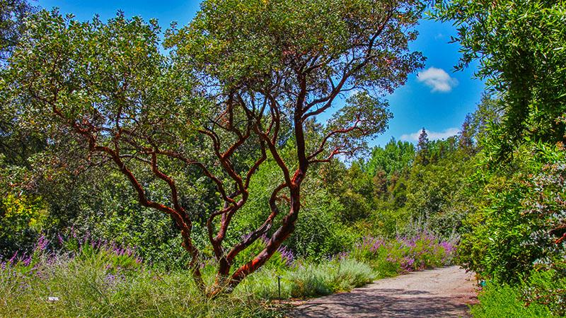 Walking thru the many California native environments in the Garden